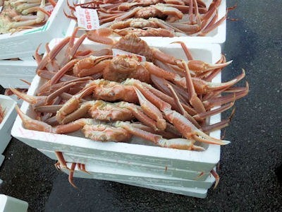 アクティブハウス越前で売っていた水蟹