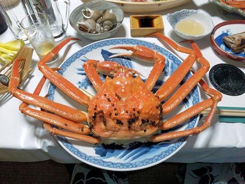越前蟹フルコース茹で蟹