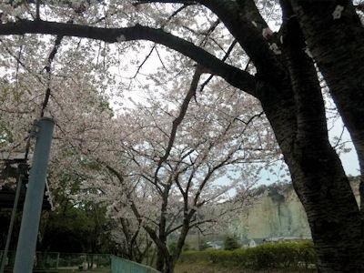 花見大会2012