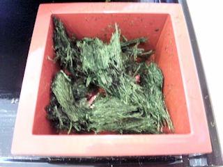 たかさご本家磯香る緑三昧のおうどんの海苔