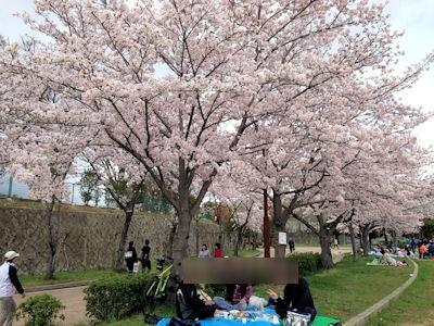 高砂市総合運動公園花見2017