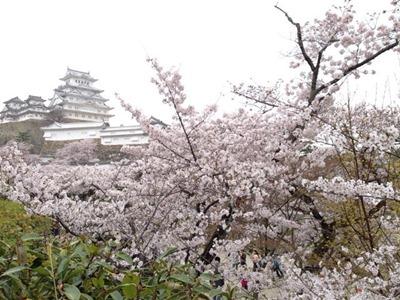 姫路城観桜会